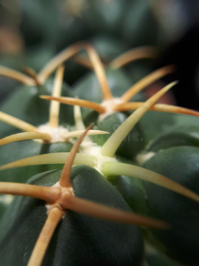 Las espinas del cactus cercanas suben fotografía de archivo libre de regalías