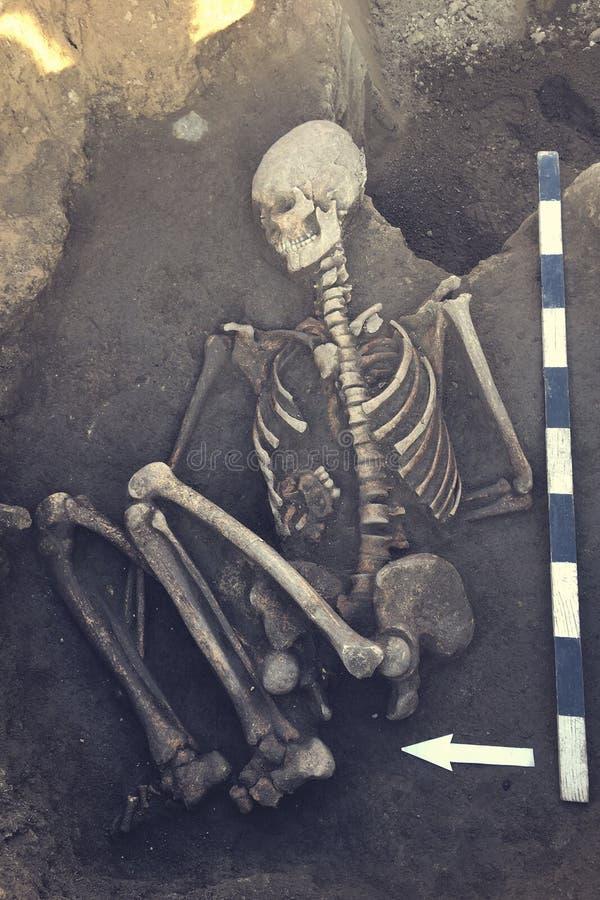 Las excavaciones arqueol?gicas y encuentran los huesos de un esqueleto en un entierro humano, herramienta de funcionamiento, regl fotos de archivo libres de regalías