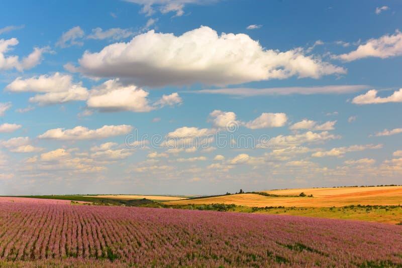 Las extensiones montañosas de los campos de la lila de campos sabios y amarillos de las cosechas de grano Paisaje hermoso de los  fotografía de archivo libre de regalías