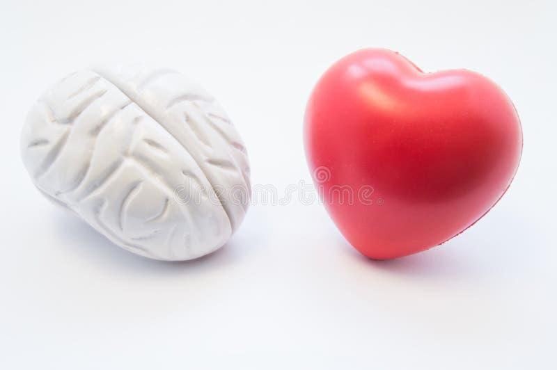Las figuras del corazón y del cerebro mienten uno al lado del otro en el fondo blanco Visualización de la conexión entre el cereb imagen de archivo libre de regalías
