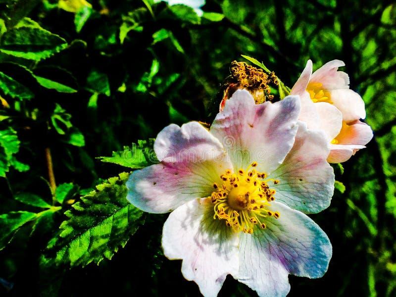 Las flores imagenes de archivo