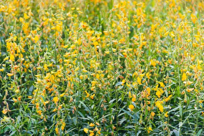 Las flores amarillas y las hojas verdes colocan en tiempo de verano imágenes de archivo libres de regalías