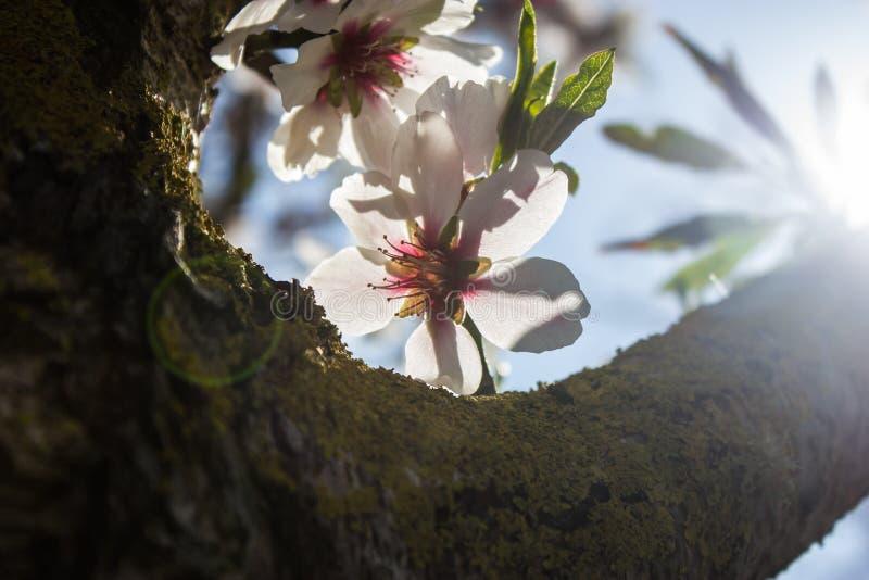 Las flores apoyan la luz foto de archivo