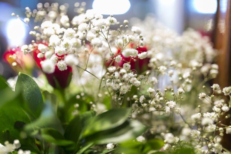Las flores blancas de Bristol Fairy de la respiración de los bebés del gypsophila se cierran para arriba adentro fotografía de archivo