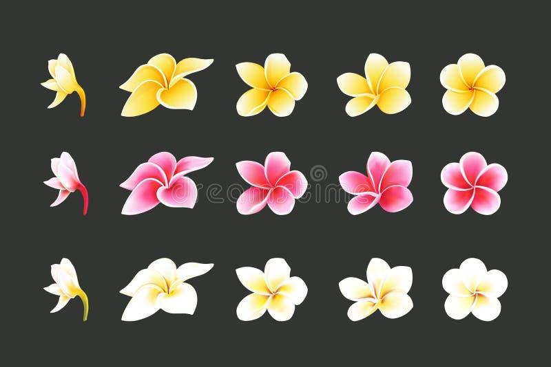 Las flores blancas, rosadas y amarillas del Plumeria fijadas en elementos styles realistas fijaron fotos de archivo