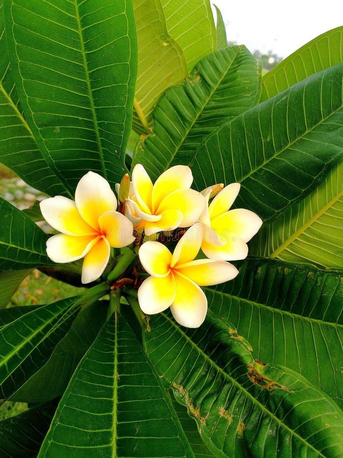 Las flores blancas y amarillas entre verde largo se van fotografía de archivo libre de regalías