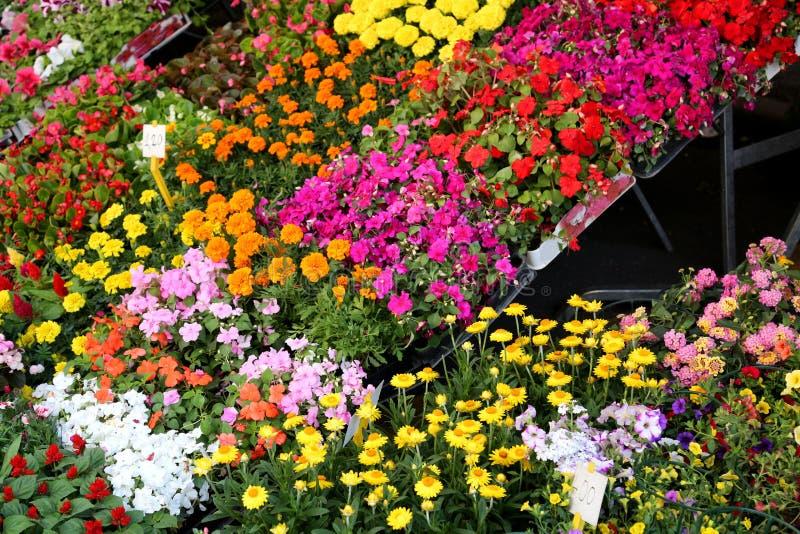 Las flores coloridas florecieron en la primavera para la venta en centro de jardín fotos de archivo
