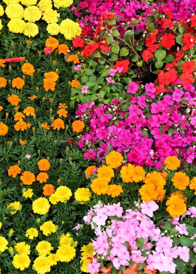 Las flores coloridas florecieron en primavera en una tienda del jardín foto de archivo libre de regalías