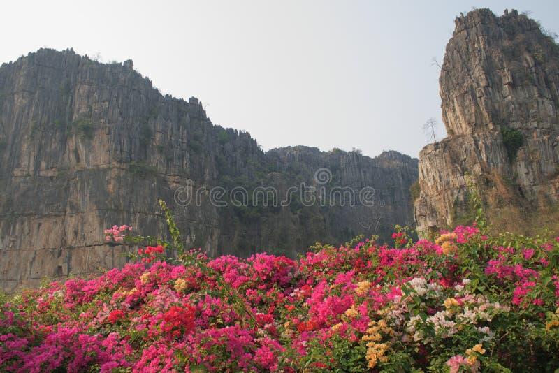 Las flores coloridas y la montaña de piedra fotos de archivo