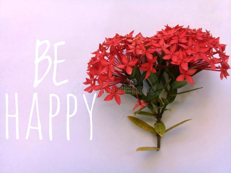 Las flores con el fondo rosa claro y la frase sean felices después imágenes de archivo libres de regalías