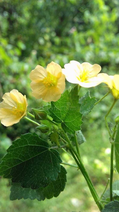 Las flores crecen al aire libre en la caída en un día soleado imagen de archivo libre de regalías