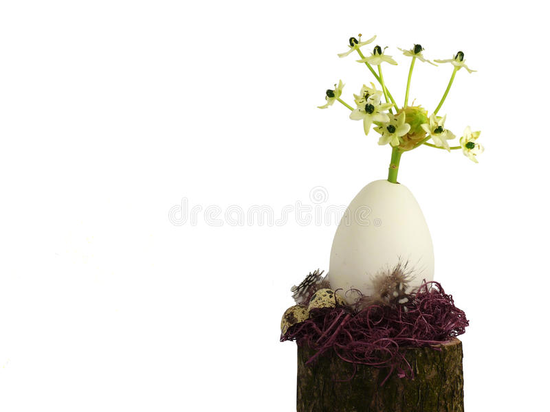 Las flores crecen hacia fuera de la decoración de Pascua del resorte del huevo imagen de archivo libre de regalías