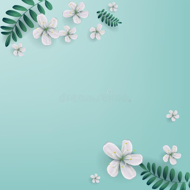 Las flores de cerezo con el espacio de la copia, Sakura blanco florecen springti stock de ilustración