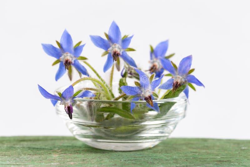 Las flores de la borraja se cierran para arriba (los officinalis del Borago fotos de archivo libres de regalías