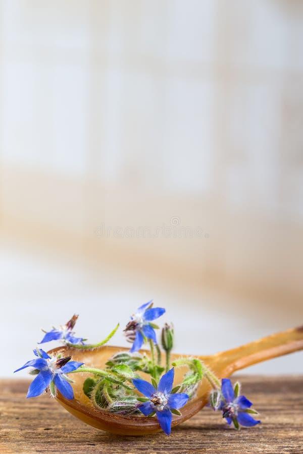 Las flores de la borraja se cierran para arriba (los officinalis del Borago imagen de archivo libre de regalías