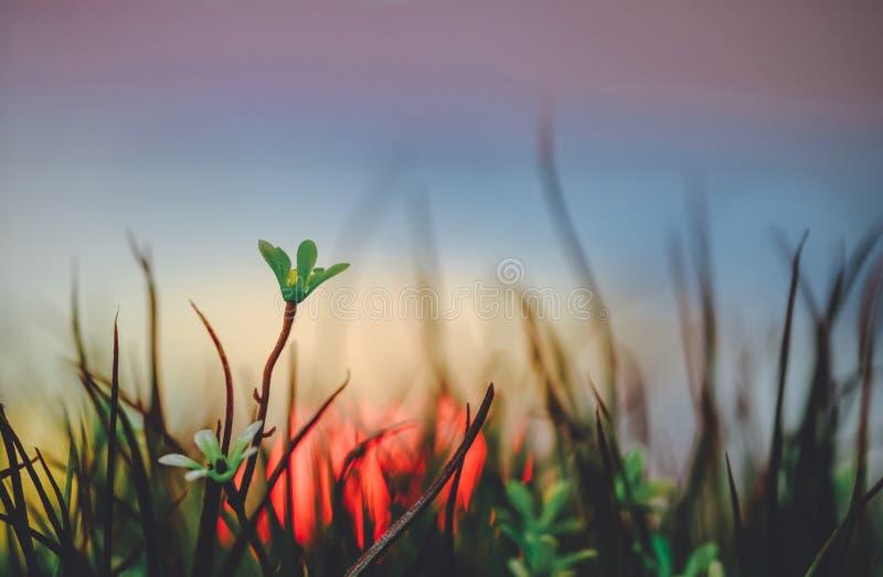 Las flores de la hierba están en la ciudad con th de color claro de los resplandores de la noche imagen de archivo