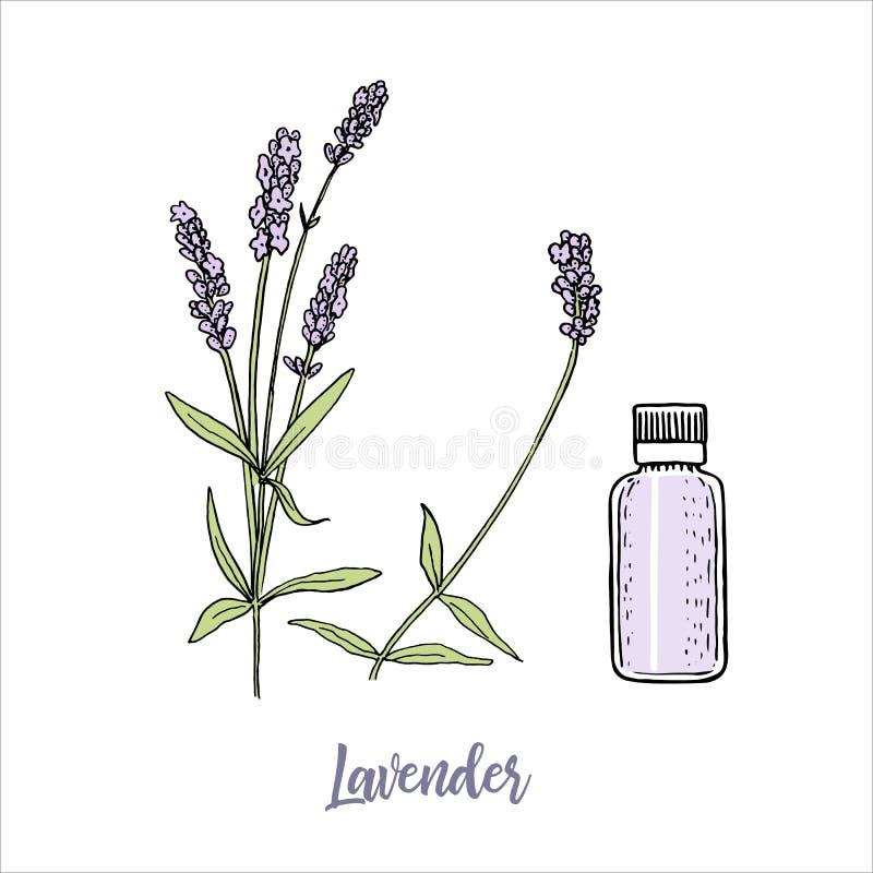 Las flores de la lavanda colorearon la botella de aceite esencial del estilo y de los cosmetcs del bosquejo steem y cabeza en la  stock de ilustración