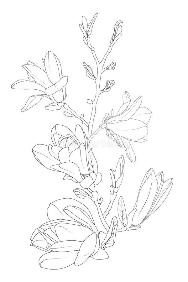 Las flores de la magnolia florecen rama de árbol del flor La línea arte aisló el dibujo blanco negro Elemento botánico del diseño ilustración del vector