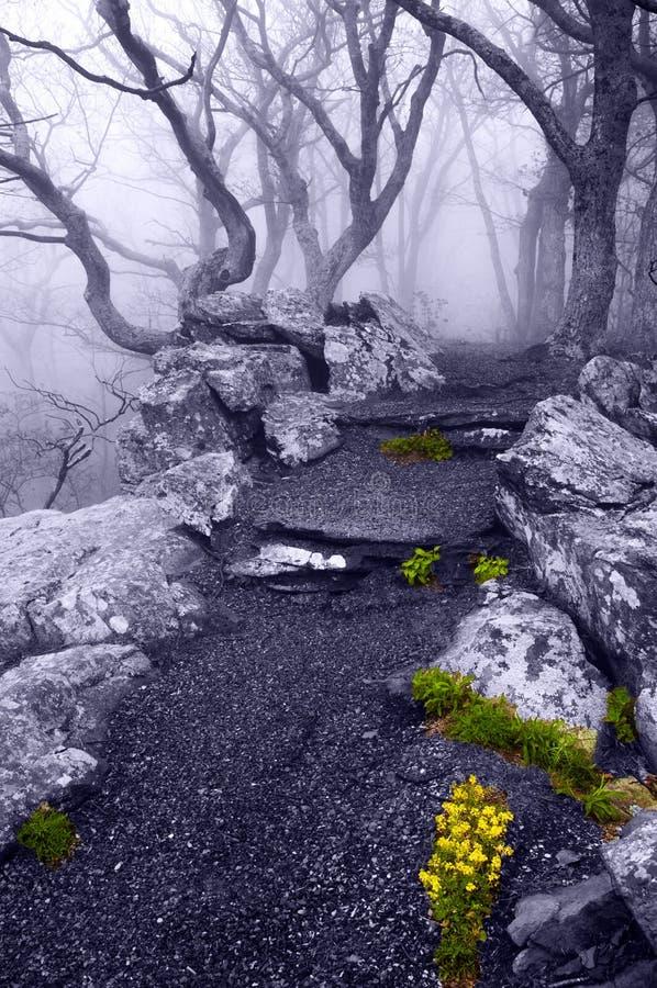 Las flores de la niebla densa y de la primavera en la roca de la Betty se arrastran en Shenan imágenes de archivo libres de regalías