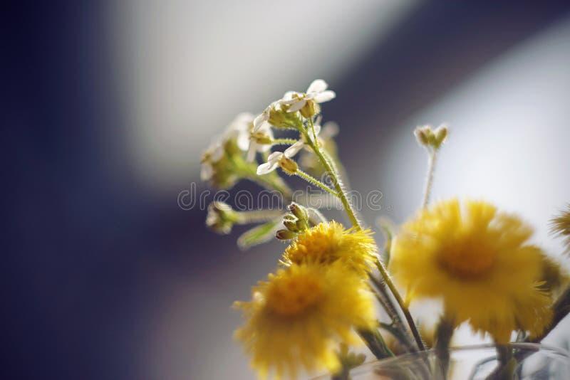 Las flores de la primavera se colocan en un ramo en un florero de cristal fotos de archivo