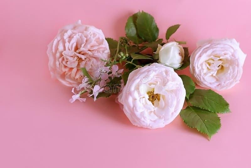 Las flores de la rosa son suavemente rosadas en color en un fondo en colores pastel de la lila dulce con el espacio de la copia E fotografía de archivo