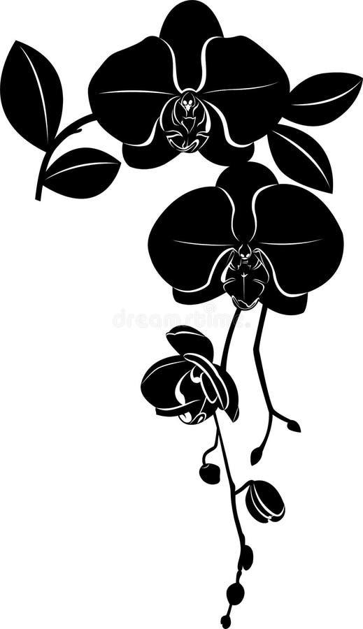 Las flores de las orquídeas se aísla ilustración del vector