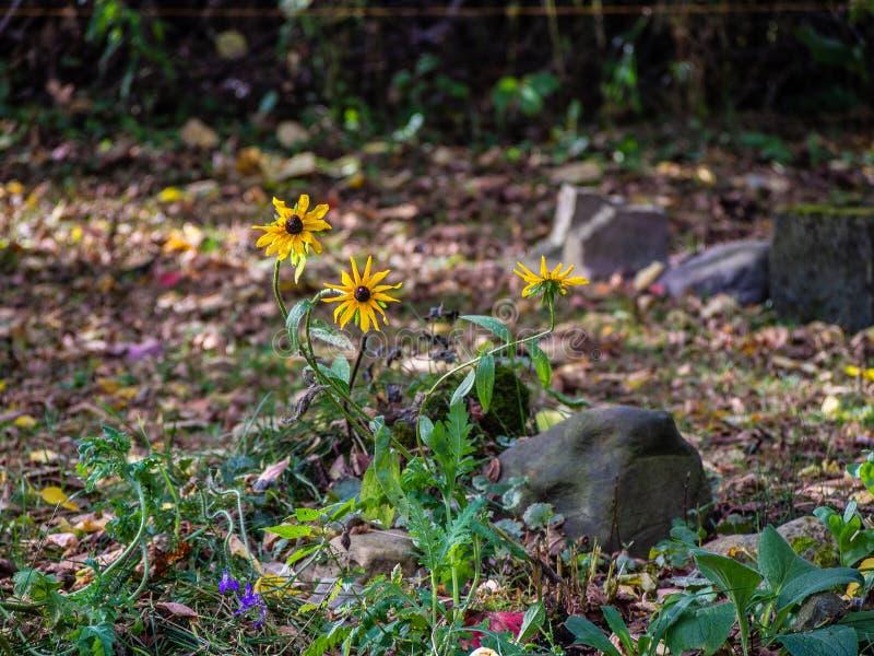 Las flores del otoño pasado fotografía de archivo libre de regalías