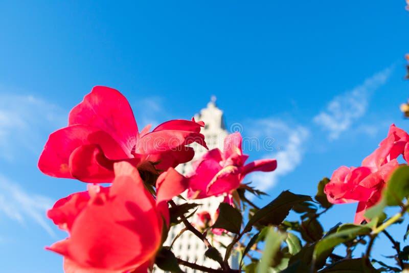 Las flores en el edificio del capitolio del estado de Luisiana parquean fotografía de archivo libre de regalías