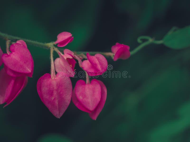 Las flores en forma de corazón rosadas imagen de archivo