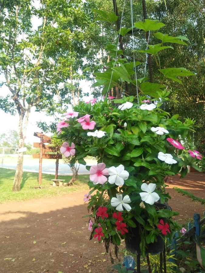 Las flores están restaurando siempre foto de archivo libre de regalías