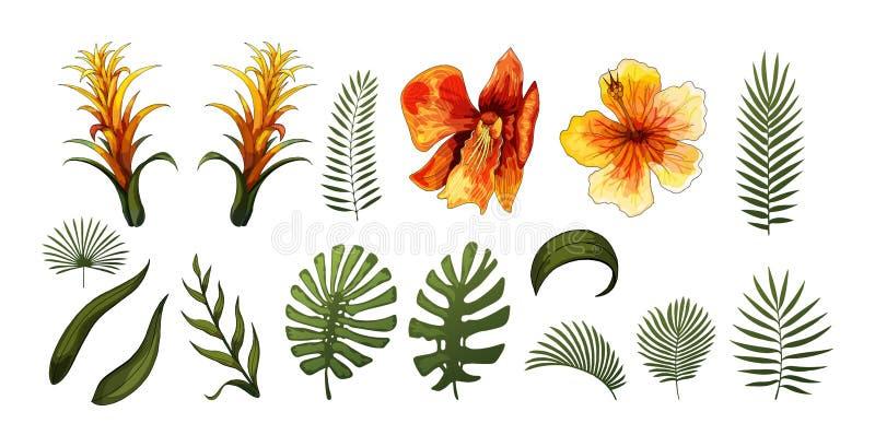 Las flores exóticas, las hojas tropicales diseñan elementos Ejemplos florales del vector fotografía de archivo