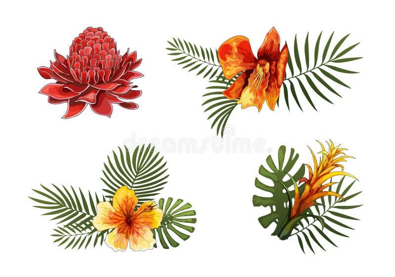 Las flores exóticas, las hojas tropicales diseñan elementos Ejemplos florales del vector imagenes de archivo