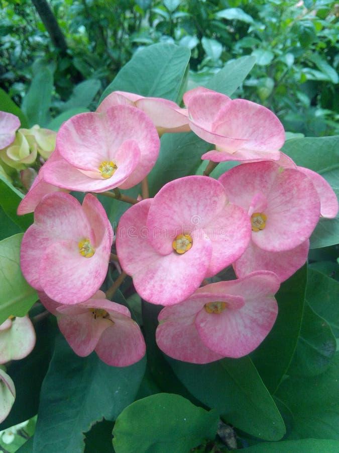 Las flores grandes fotos de archivo libres de regalías