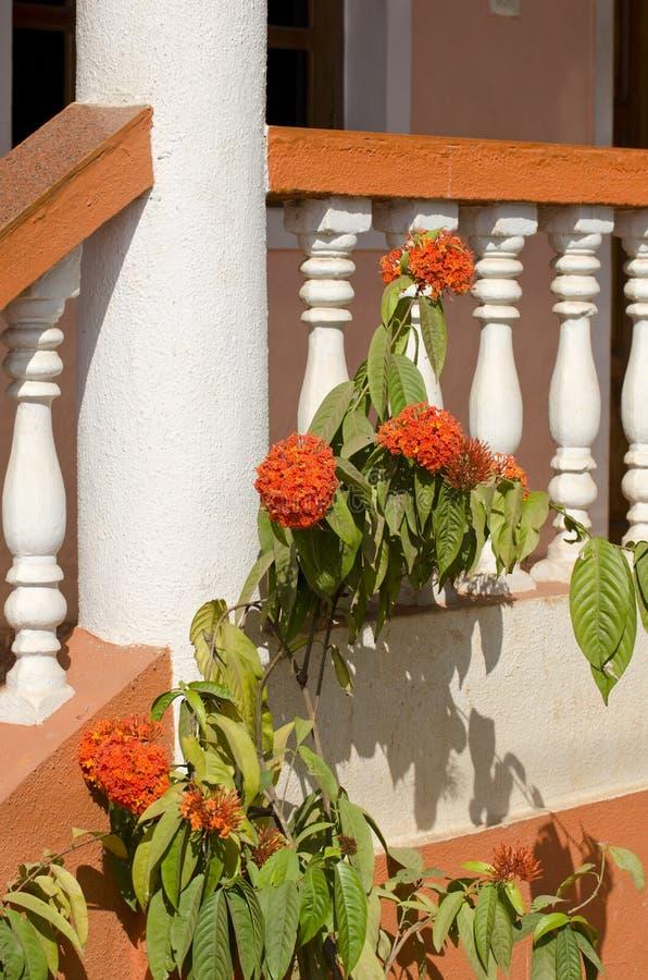 Download Las Flores Hermosas Acercan A Los Carriles De La Escalera De La Casa Imagen de archivo - Imagen de planta, jardín: 41917095