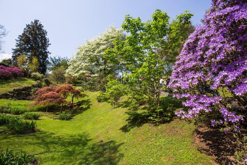Las flores hermosas ajardinan en el jardín botánico del chalet Taranto en Pallanza, Verbania, Italia fotos de archivo