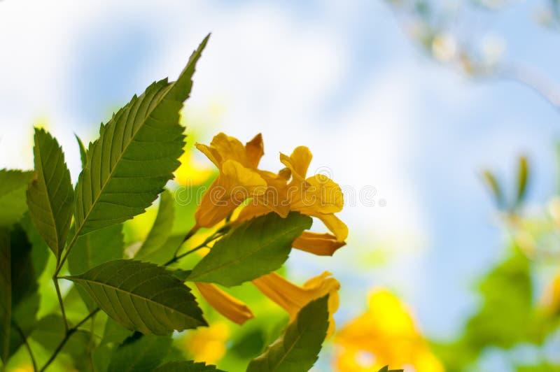 Las flores hermosas amarillas se toman el tiro así como completo foto de archivo