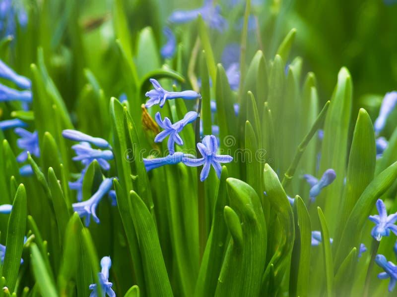 Las flores hermosas crecen en el jardín imagen de archivo