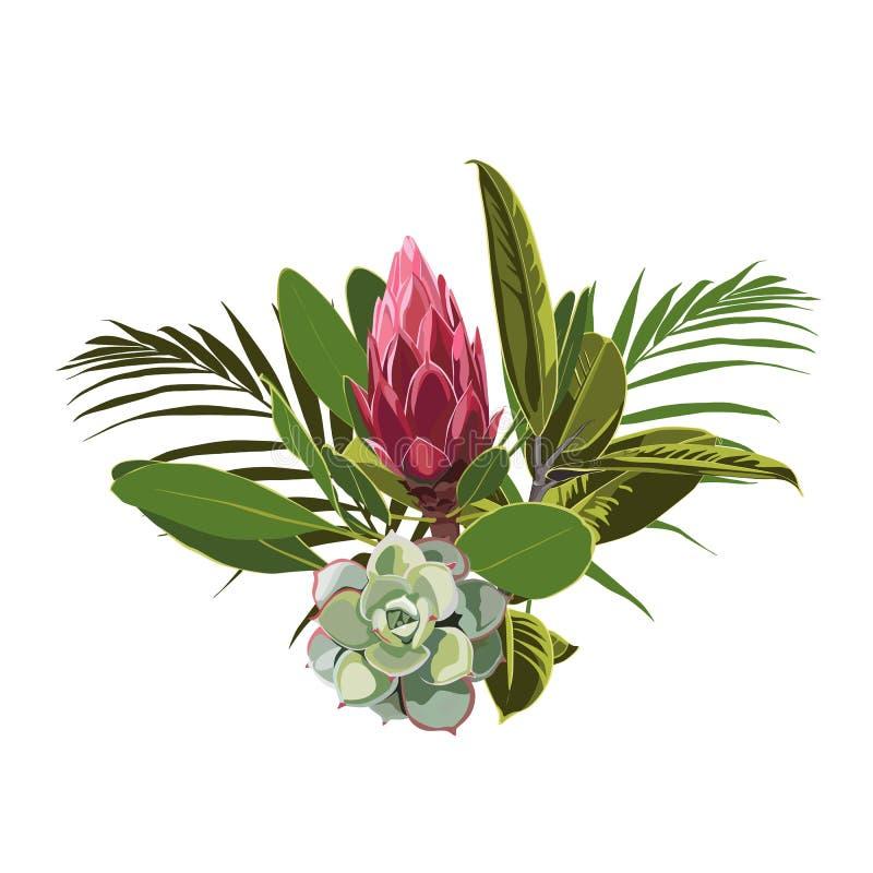 Las flores, las hojas de palma, la hoja de la selva, el succulent y el protea tropicales florecen stock de ilustración