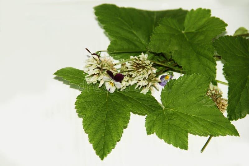 Las flores mienten en las hojas de pasas imagen de archivo libre de regalías
