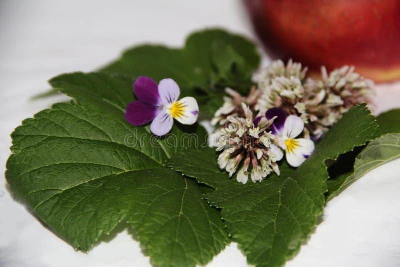 Las flores mienten en las hojas de pasas foto de archivo libre de regalías