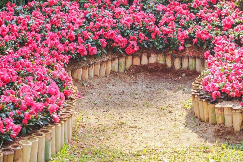 Las flores multicoloras coloridas que florecen adentro gaden, campo de la naturaleza imágenes de archivo libres de regalías