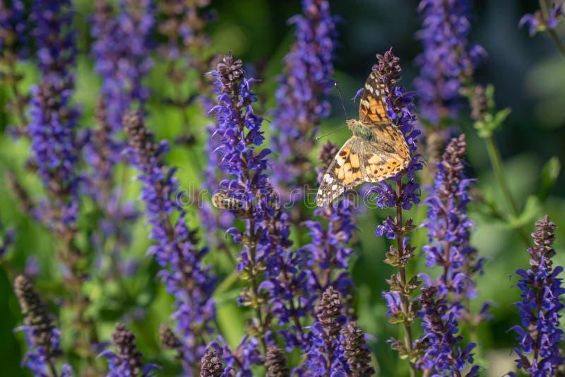 Las flores multicoloras en prado verde en abejas y mariposas que vuelan del bosque complementan la belleza y la diversidad de la  imágenes de archivo libres de regalías