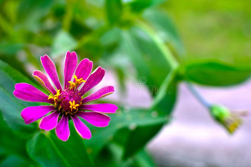 Las flores p?rpuras son naturalmente hermosas Comodidad del ojo foto de archivo
