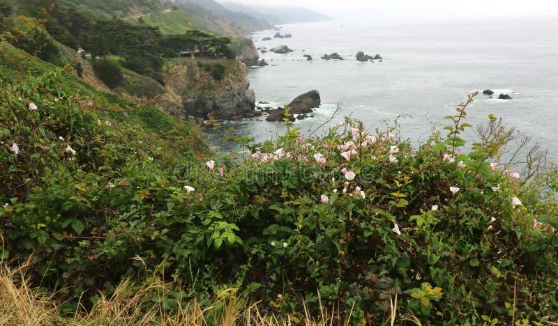 Las flores rayadas rosadas de la correhuela enmarcan una vista del Big Sur, CA imágenes de archivo libres de regalías