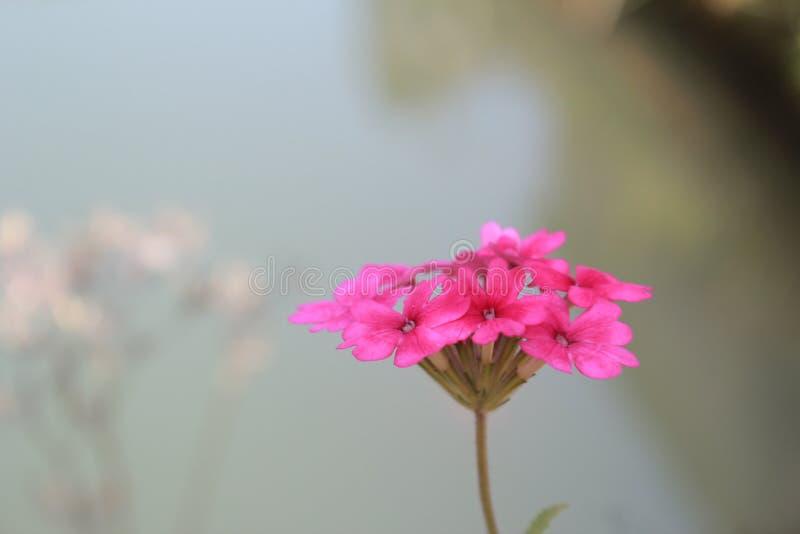 las flores riegan pescados imagen de archivo