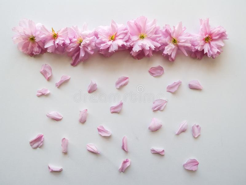 Las flores rosadas arreglaron en una l?nea con los p?talos que simulaban la lluvia en una tabla blanca Visi?n superior foto de archivo