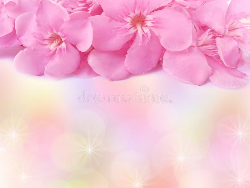las flores rosadas hermosas enmarcan o confinan sobre fondo del pastel de la falta de definición fotografía de archivo libre de regalías