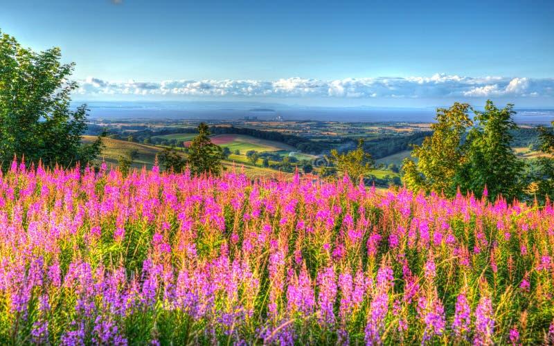 Las flores rosadas y la visión desde las colinas Somerset England Reino Unido de Quantock hacia Hinkley señalan la central nuclea foto de archivo