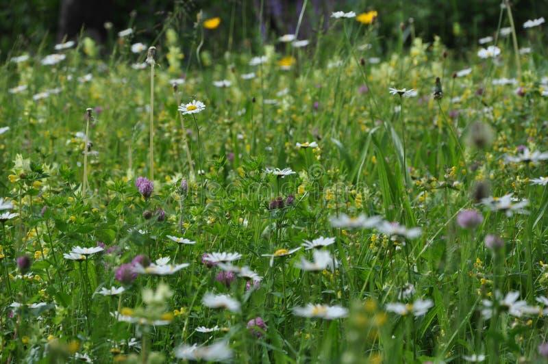 Las flores salvajes contra la extinci?n de la especie, todo el mundo pueden hacer su propia contribuci?n en el jard?n imagen de archivo