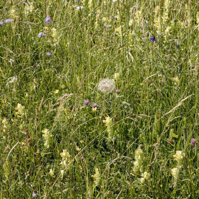 Las flores salvajes crecen en el prado verde fotografía de archivo